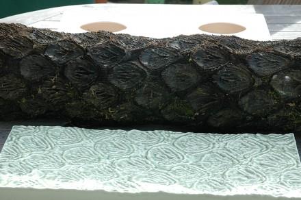 Ponga trunk real and ceramic