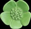 Ribbonwood Flower