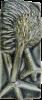 Wall Oblong Kiwi